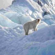 Ấn Độ sẽ tập trung đầu tư vào Bắc Cực