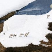 Mỹ mở đường cho hoạt động khoan dầu khí trong khu bảo tồn thiên nhiên Alaska